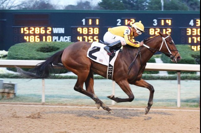 Terra Promessa looks tough to defeat in Saturday's Grade II Azeri for fillies and mares at Oaklawn Park. (Oaklawn photo)