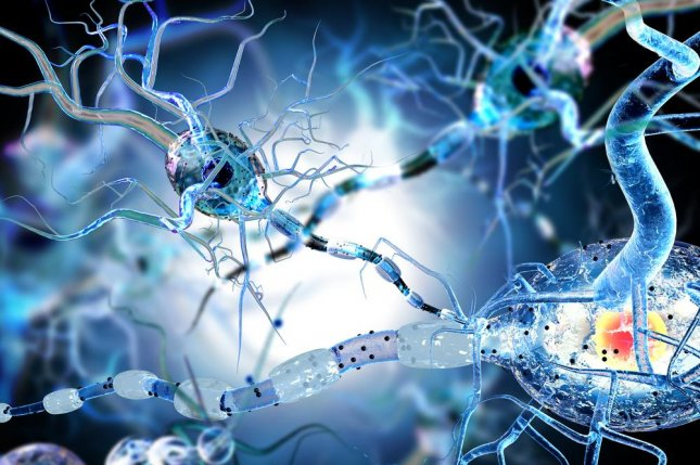 Researchers observed the strongly anti-epileptic effect of decanoic acid on mice brains, according to a new study. Photo by Ralwel/Shutterstock