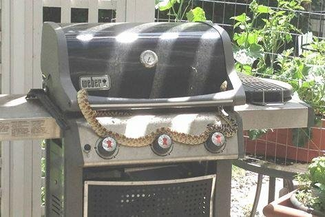 Maybe the snake was just in the mood to cook out. Photo by Colorado Association of Animal Control Officers/Facebook