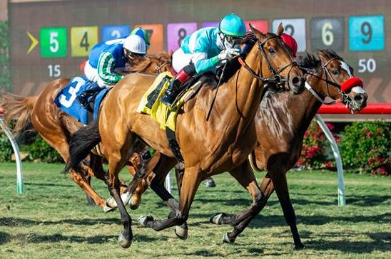 Orglandes, part of a weekend invasion by New York-based trainer Chad Brown, wins Thursday's Red Carpet at Del Mar. Benoit photo, courtesy of Del Mar Turf Club