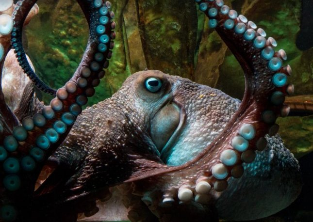 New Zealand's National Aquarium saw one of its resident octopi, Inky, escape while his tank was undergoing maintenance. The octopus snuck out of a small opening in it's cage and entered a storm drain that led to the Pacific Ocean.  Screen capture/RNZ/YouTube