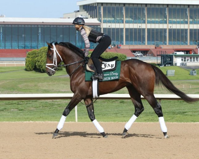 Magnum Moon, the favorite, tests the track at Oaklawn Park in preparation for Saturday's Arkansas Derby. (Oaklawn Park photo).