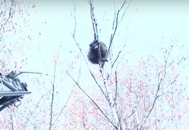 A raccoon survived a jump from a 20-foot-tall tree as rescuers attempted to lure it down. The raccoon fell to the concrete with a thud, startling children in the area, but appeared to be unharmed.  Screen capture/Ruptly TV/YouTube