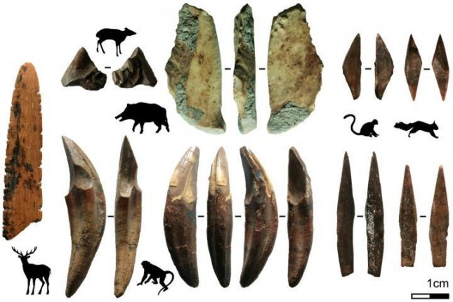 Over time, humans increased the length of their tools in order to target larger and larger animals, eventually taking down deer and pigs. Photo by Langley et al., 2020