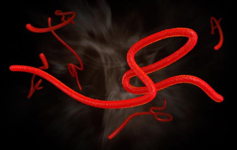 Study: WHO response to Ebola outbreak too slow