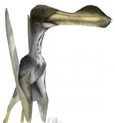 This is an image of a giant pterosaur, Coloborhynchus. Credit: Image courtesy of Mark Witton, University of Portsmouth: ww.markwitton.com