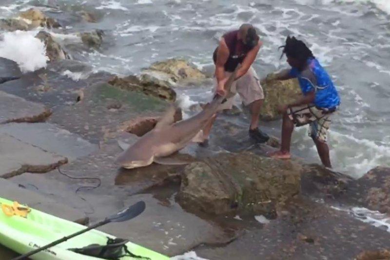 Watch 6 foot 4 inch shark caught in galveston texas for Shark fishing from shore