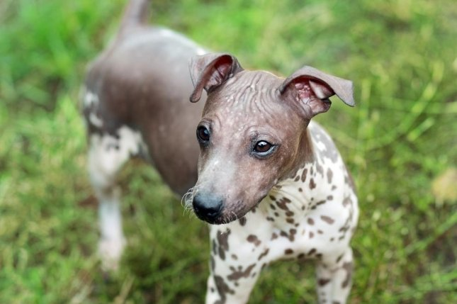 Meet the two new breeds joining the American Kennel Club