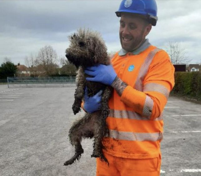 Utility workers in Britain came to the rescue of a dog that chased a rat up an outtake waste pipe and ended up stranded in a sewer for about 24 hours. Photo courtesy of Thames Water