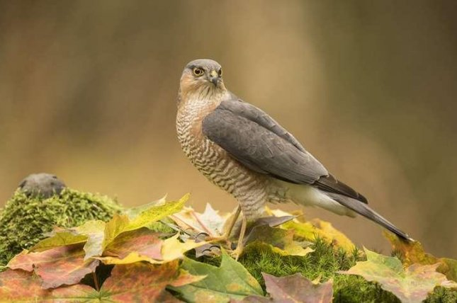 Models accurately predict how climate change impacts birds