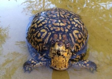 Turtles stolen from Florida park