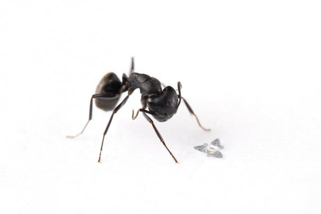 The microflier is smaller than an ant -- roughly the size of a grain of sand -- uses the wind to fly and disintegrates in water once its flight has ended. Photo by Northwestern University