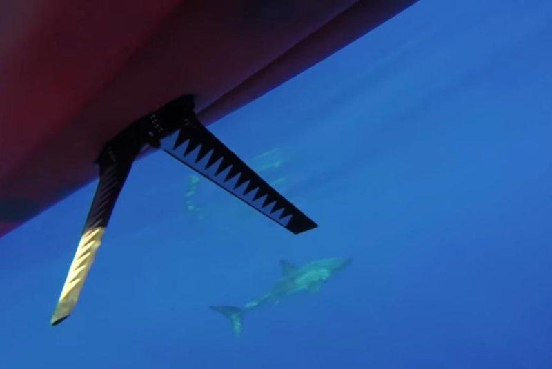A great white shark follows a fisherman's kayak off Maui. Screenshot: Storyful