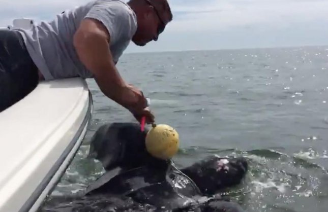 Officers from the Jacksonville sheriff's office rescued a 9-foot leatherback sea turtle that had become ensnared in a crab trap. Lt. Steve Mullen reached out from the boat and was able to cut the turtle free.  Photo by Jacksonville Sheriff's Office/Facebook