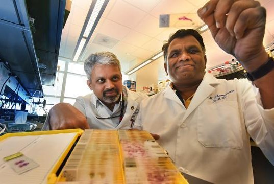 Dr. Puttur Prasad, left, and Dr. Muthusamy Thangaraju found two chemotherapy drugs are only effective when used together. Photo by Phil Jones/Augusta University