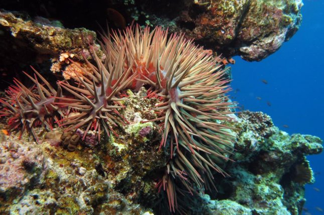 A new underwater robot will soon be put on the job of ridding reefs of invading crown-of-thorns starfish. Photo by LauraD/Shutterstock