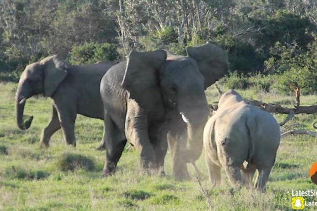 Rhino fails to intimidate elephant in tense stand-off