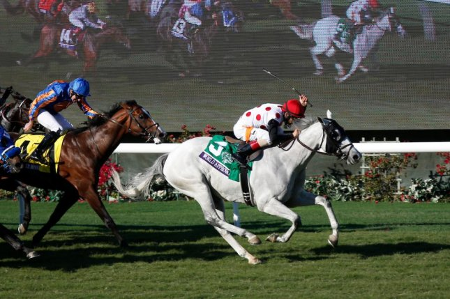World Approval (the gray), seen winning the 2017 Breeders' Cup Mile, is the favorite for Saturday night's Wise Dan Stakes at Churchill Downs. Photo courtesy of Breeders' Cup