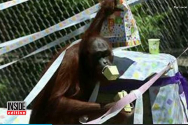 Cameron Park Zoo orangutan Mei is expecting a baby, and the zoo is throwing her a baby shower with a gift registry at Target. Screenshot: Inside Edition