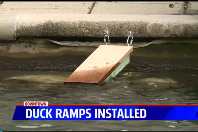 Indianapolis installed four ramps in its downtown canal to help prevent ducklings and goslings from getting stuck in the water and drowning. Screenshot: WXIN-TV