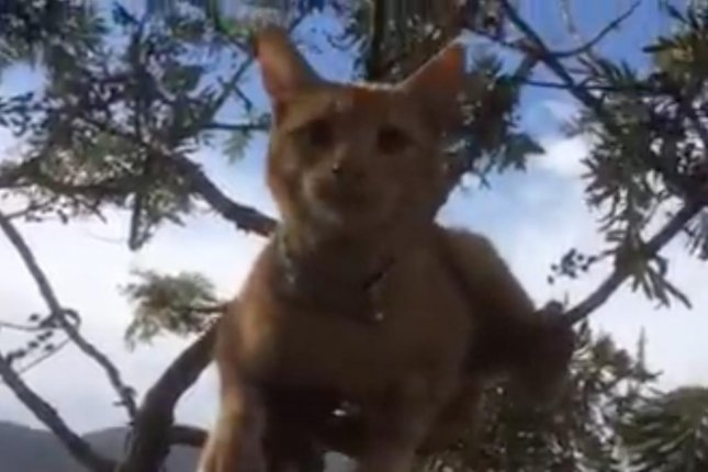 An Australian raised $205 in four hours through GoFundMe to help rescue her neighbor's cat, Boots, from a 40-foot tree. Susie Butler was able to use the funds to hire professional animal rescuer Nigel Williamson, who successfully brought the cat down to safety.  Screen capture/Nigel Williamson/Facebook