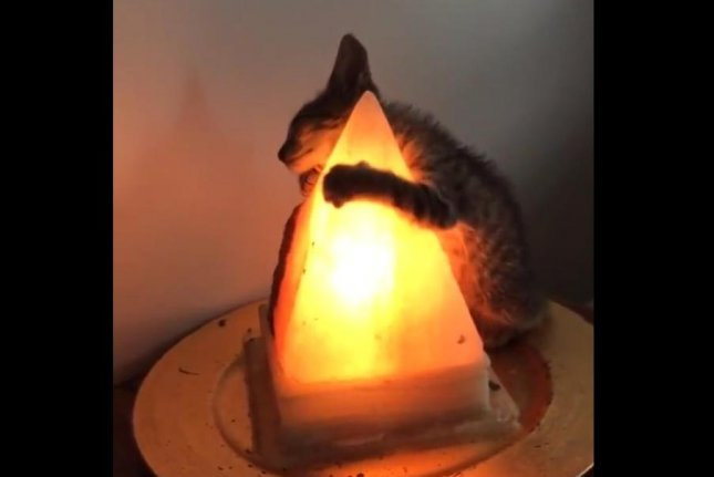 My Salt Lamp Keeps Leaking : Watch: Cat hugs tight to salt lamp in viral video - UPI.com