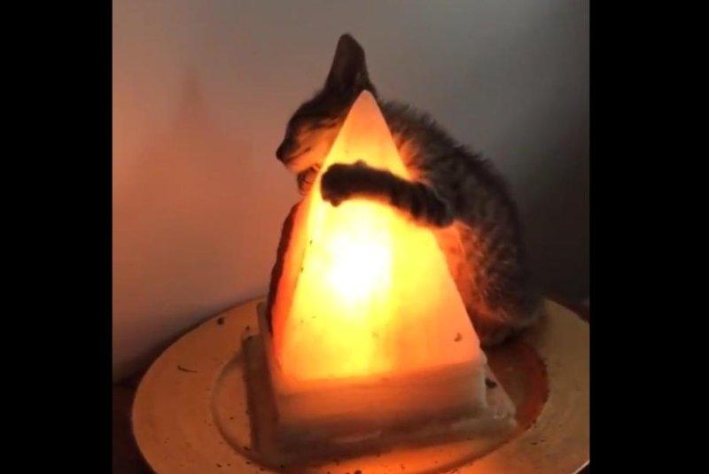 Watch Cat Hugs Tight To Salt Lamp In Viral Video Upi Com