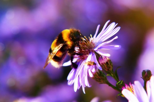 Bees count landmarks as they fly in search of food. Their numerical competence helps them find their way back home. Photo by Creative Commons