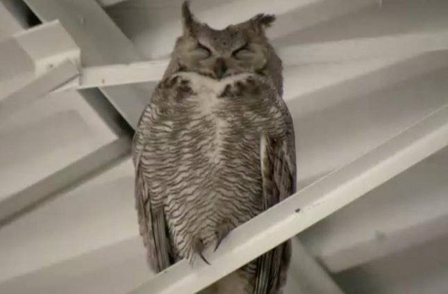 Owl family makes home in Lowes garden center UPIcom
