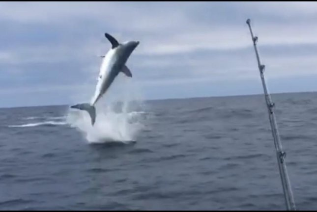 A mako shark hooked by a San Diego charter fishing boat leaps high out of the water. Screenshot: San Diego Saltwater Fly Fishing-Capt. Mark Martin/Facebook