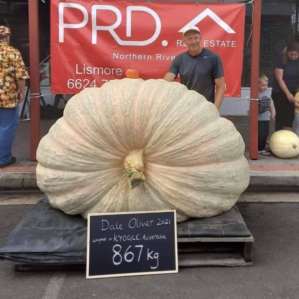 Dale Oliver of Knockrow, New South Wales, Australia, broke a record for the entire southern hemisphere when he grew a pumpkin that weighed in at 1,911 pounds. Photo by the Summerland Pumpkin Competition/Facebook