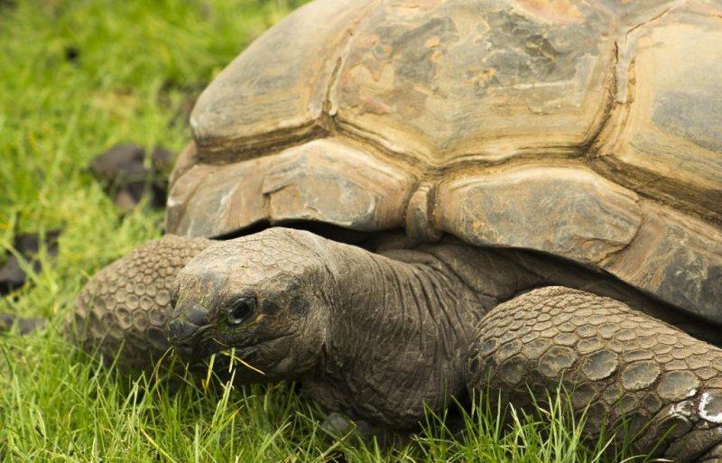 Hominids Ate Tortoise 400 000 Years Ago Upi Com