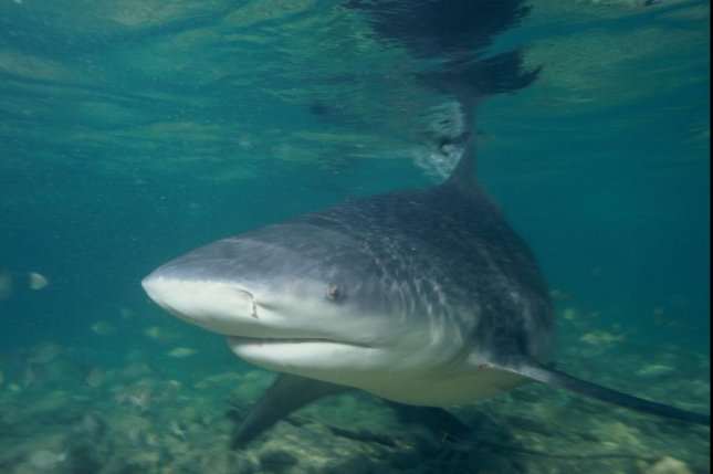 Swimmer bitten by shark at Haulover Beach, reports say