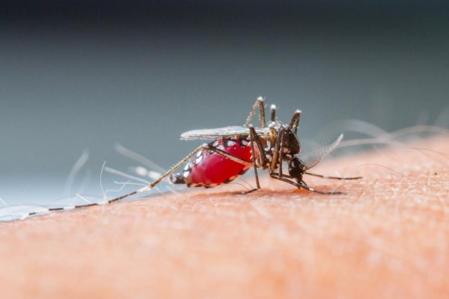 Mexico approves first vaccine for dengue fever