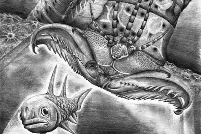 Ancient Worm Discovered to Have Massive Jaws