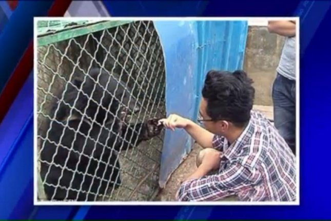 The two puppies Wang Kayui brought home to China from Vietnam were turned over to wildlife rescuers after he discovered they were actually Asian black bears. WGN-TV video screenshot