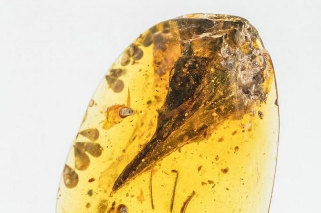 New research suggests the 'world's smallest dinosaur' is actually a lizard. Photo by Xing Lida