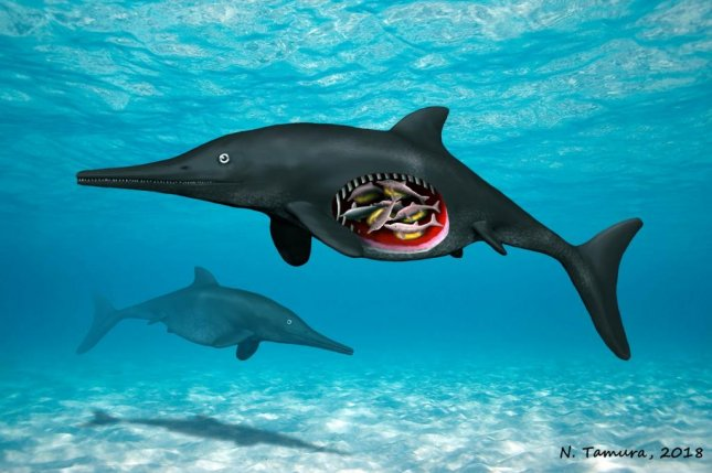 An artistic rendering shows an Early Jurassic ichthyosaur carrying eight embryos. Photo by N. Tamura/Manchester University