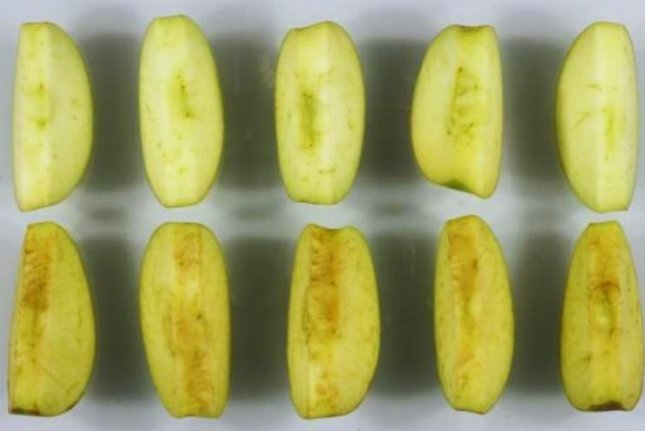 An Arctic-brand apple, developed by Okanagan Specialty Fruits (top) compared to a traditional apple. Photo: Okanagan Specialty Fruits