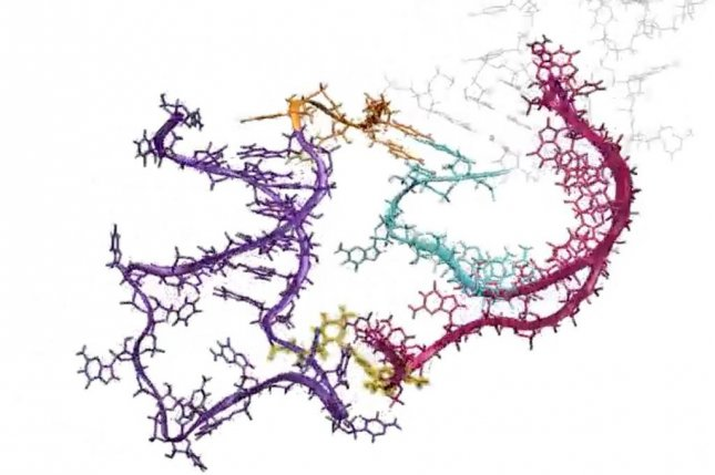 Scientists have created new detailed videos of RNA molecules folding themselves as they are synthesized. Photo by Northwestern University