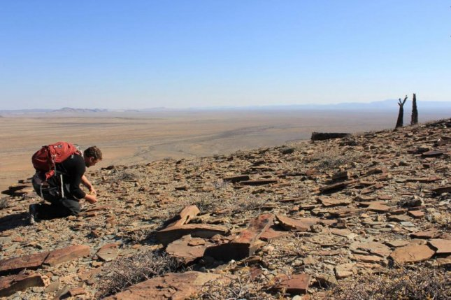 Paleontologists exaamined Ediacaran fossils in Namibia. Photo by A.F. Darroch
