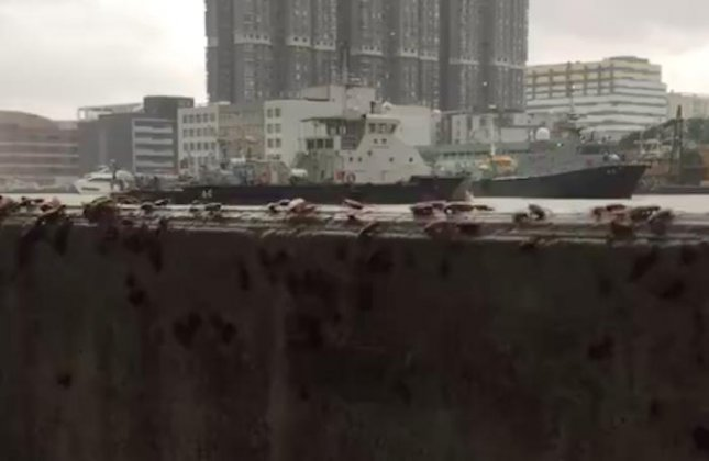 Thousands of cockroaches were seen crawling along a seaside wall in an attempt to flee Typhoon Hato in China.  Screen capture/10 Most/Facebook