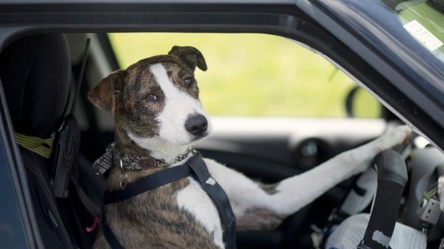 Ginny driving her car. (All photos from SPCA Auckland Facebook)