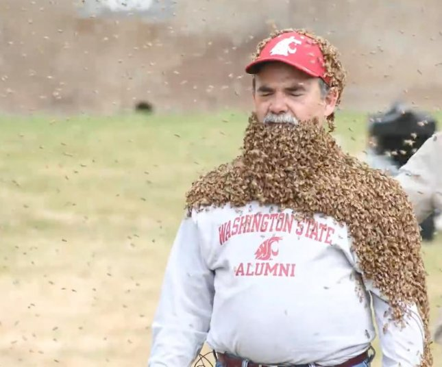 Washington State University Provost Dan Bernardo with his beard consisting of thousands of bees. Bernardo agreed to wear the bees to raise awareness about honey bee health and to raise funds for the university to build a new 15,000-square-foot bee research facility, estimated to cost $16 million. Screen capture/WSU CAHNRS/YouTube