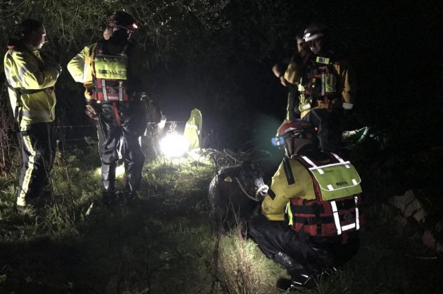 An RSPCA officer, firefighters and a specialist water and animal rescue team spent two hours working to rescue a cow that fell into a river and was swept downstream. Photo courtesy of the RSPCA