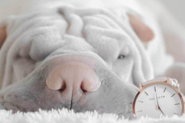 New research proves animals have an accurate sense of time. Photo by Pixabay/CC