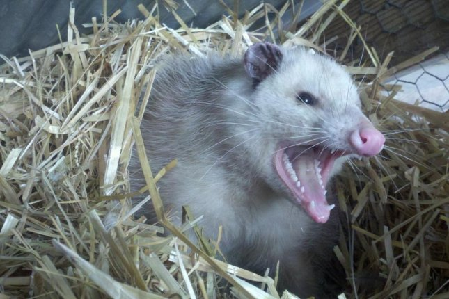 Fire set to scare off opossums destroys man's wooden house