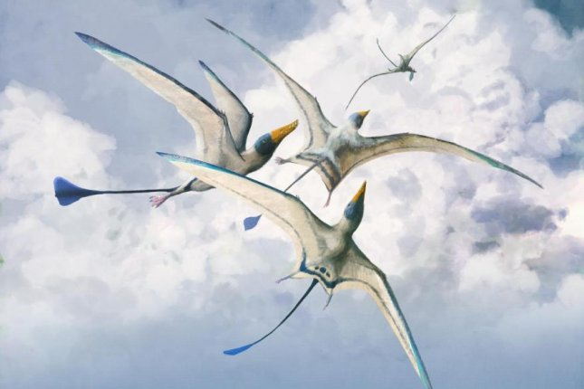 Most pterosaurs, flying reptiles that lived alongside the dinosaurs, doubled their flying efficiency over the course of their 150-million-year existence. Photo by Mark Witton/University of Reading