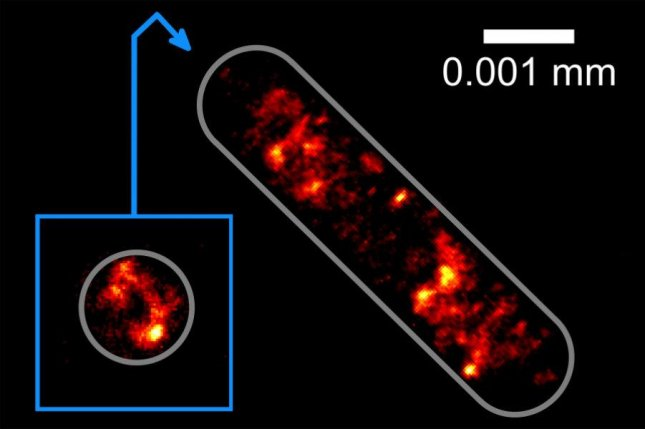 Researcher in Germany are the first to image genetic information inside an Escherichia coli bacterial cell at the highest optical resolution without affixing the sample to a glass substrate. Photo by Bielefeld University