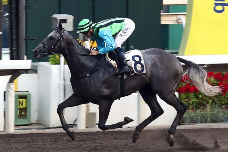 Joao Moreira wins his third race on Sunday's program at Sha Tin aboard Silver Fig. Photo courtesy of Hong Kong Jockey Club